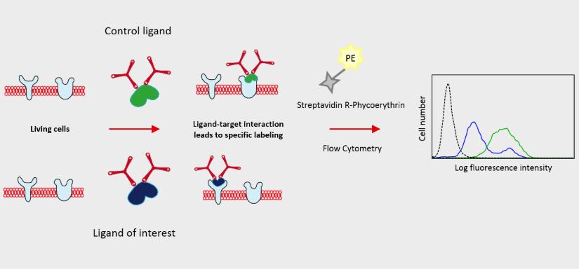 Dualsystems-Biotech-Switzerland-Flow-TriCEPS-Principle-1